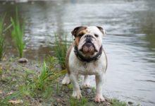 Photo of Surowe kary za niedopilnowanie niebezpiecznych psów