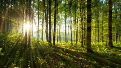 Photo of MŚ: od soboty będzie można korzystać z placów zabaw i biwakować w lasach