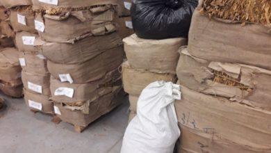 Photo of 2,5 tony sprasowanego tytoniu ukryte w lesie